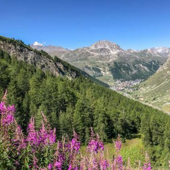 Meadows on the Col de l'Iseran, French Alps