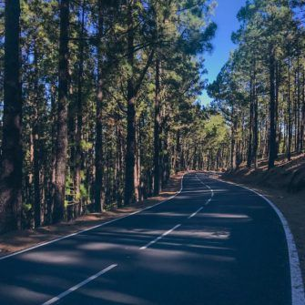 Cycling heaven: winding road through forest on Mount Teide