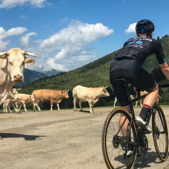 Cyclist rides past cows on the Col d'Aspin