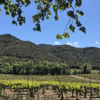 Vineyards of the Poblet region Costa Daurada