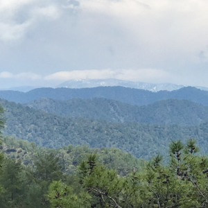 View towards Mount Olympus over forest