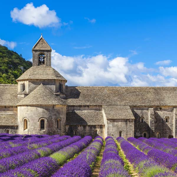 Lavender fields near the famous monastery near Gordes, Luberon, Provence