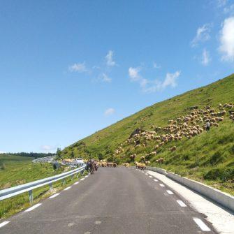 Piatra Arsa cycling climb Romania