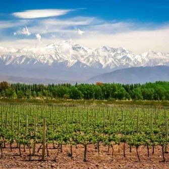 Argentinian Malbec wine region