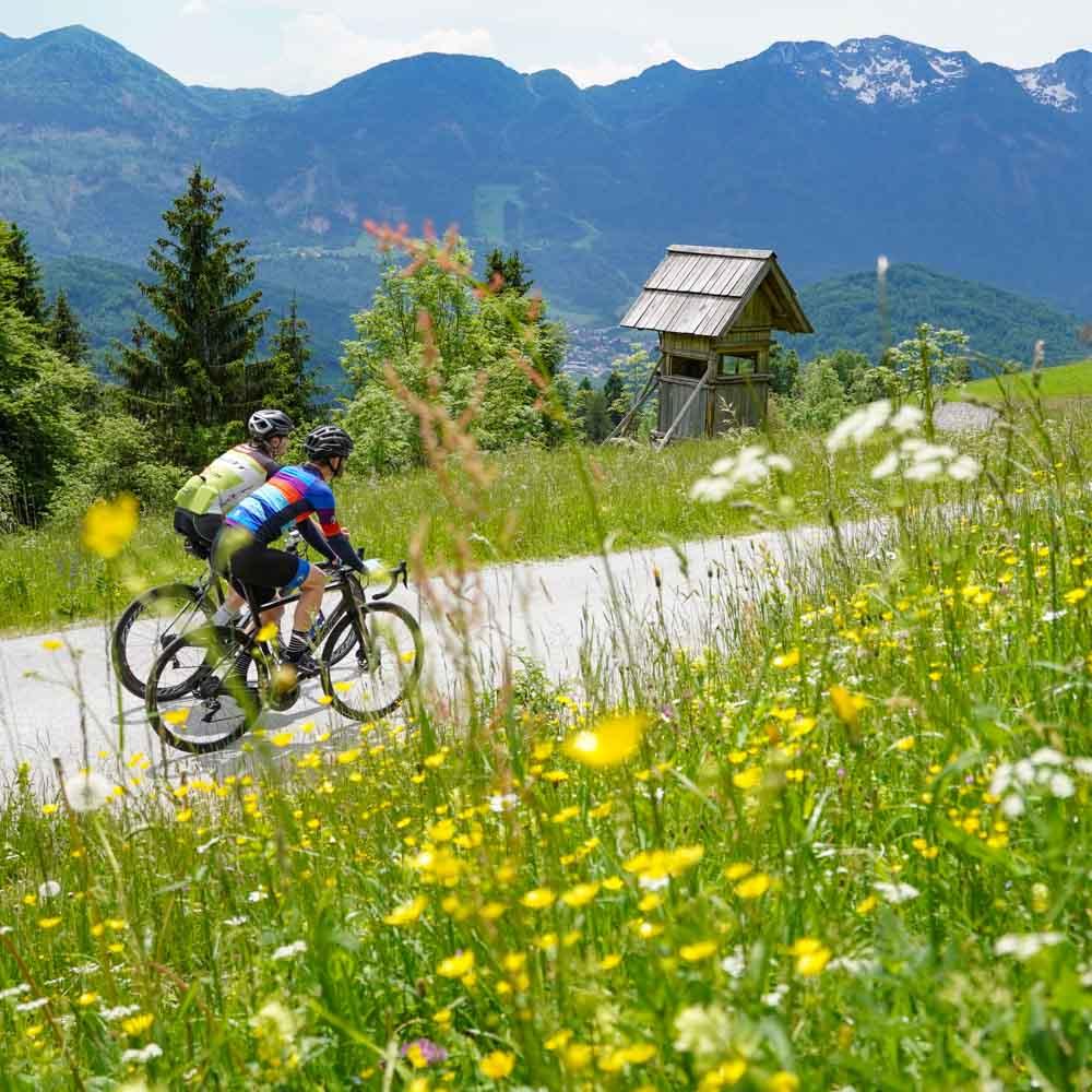 Cyclists in Julian ALps Slovenia flower fields