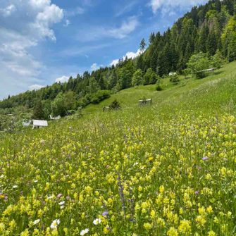 Wildflower meadows while cycling in Slovenia